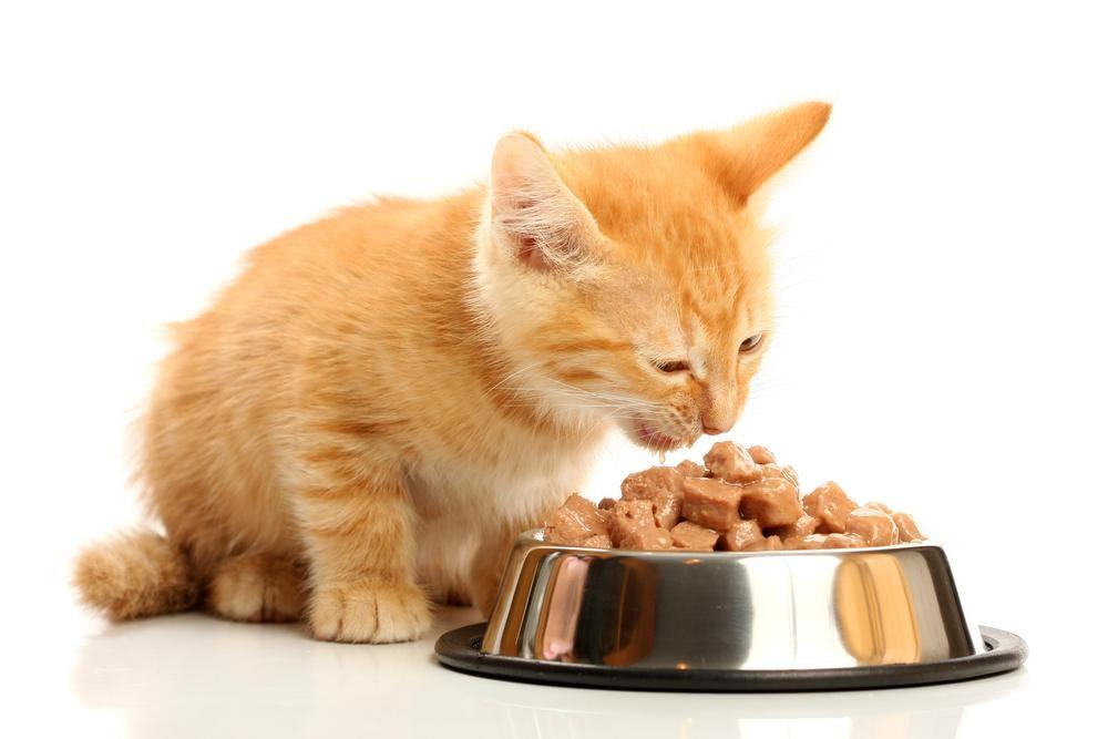 Chorizo y chistorra