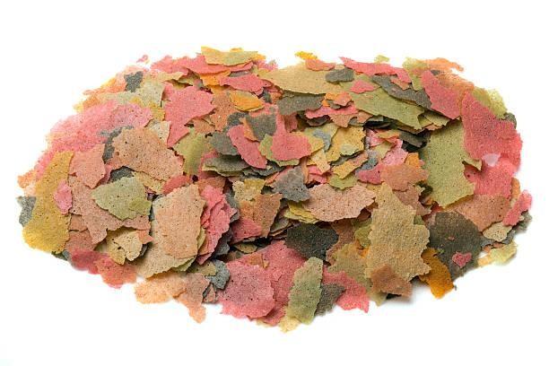 Pasta fresca y masa refrigerada